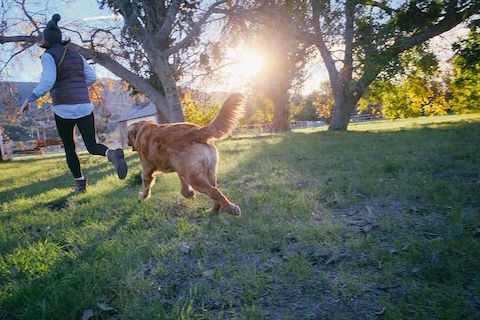 Dog and his human running in the park