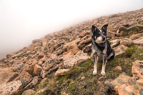 Mixed breed dog climbing rocks