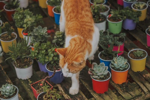 A healthy gut makes a healthy pet, sweet cat walking in plants