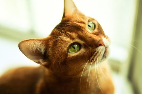 How Your Cat's Diet Could Lead to Chronnic Inflammation