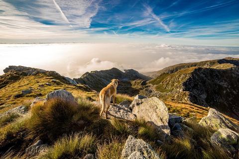 dog looking across mountain - AnimalBiome
