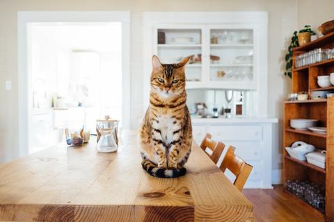 You can improve your cat's gut health by feeding them the right food and diet