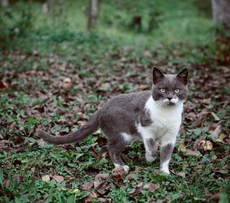 cat outdoors exposure to bacteria & microbes