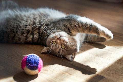 Hairballs and your cat's gut microbiome