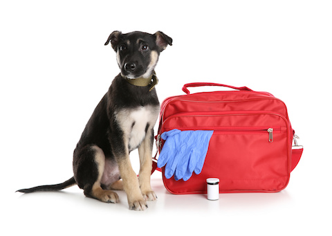 Dog with an emergency 'go bag' kit