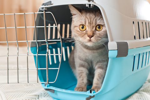 Make Sure Your Cat or Dogs Carrier is Ready