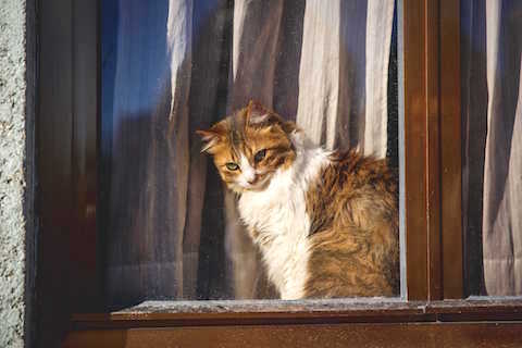 Cat looking out a window - Place a pet alert sticker where firefighters will see it