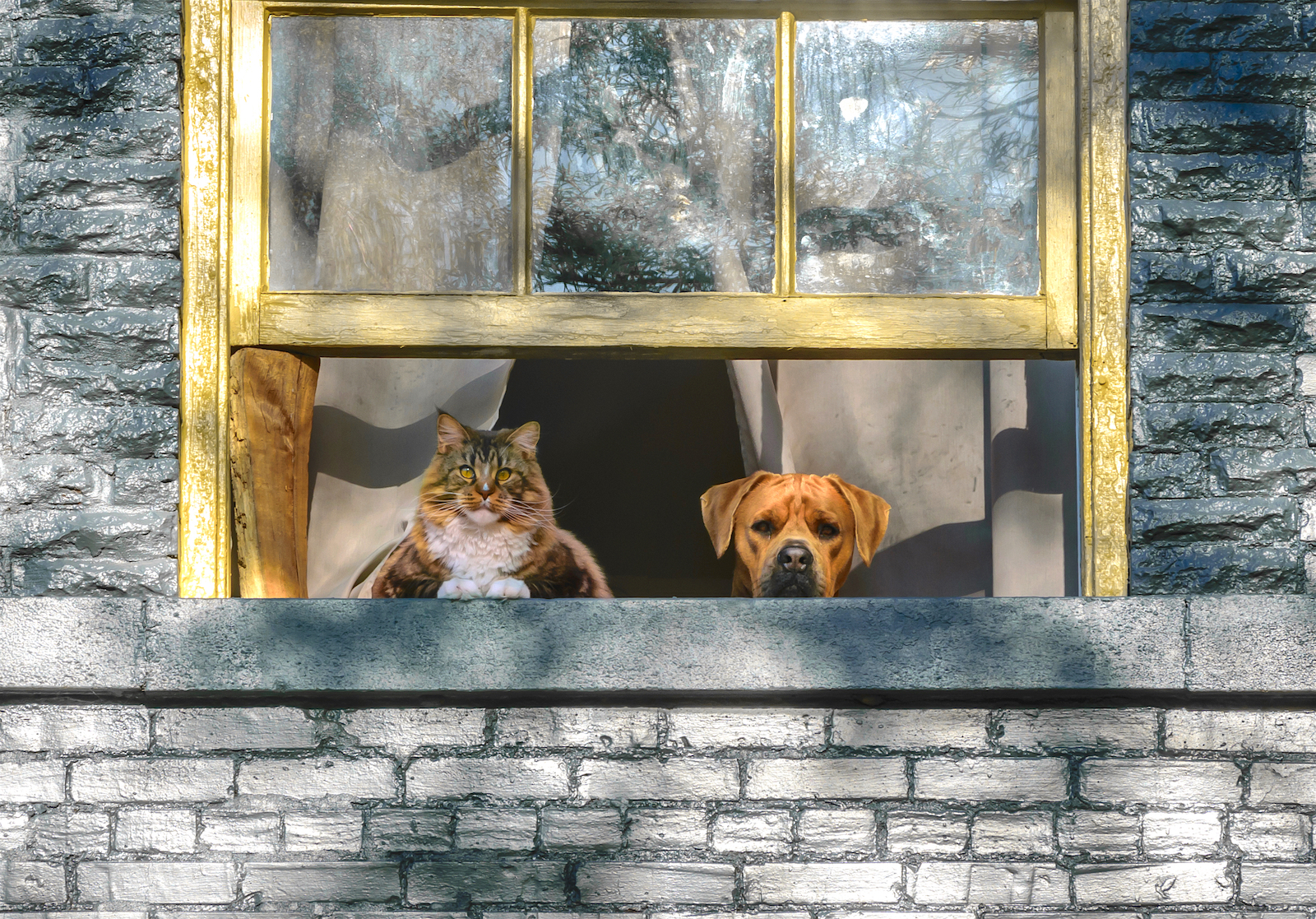Lessons from Katrina: How to Keep Pets Safe in a Hurricane