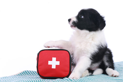Pack an emergency kit or go bag for your dog or cat