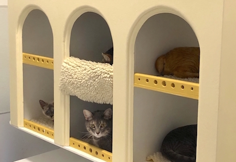 Cats who are available for adoption at Cat Town