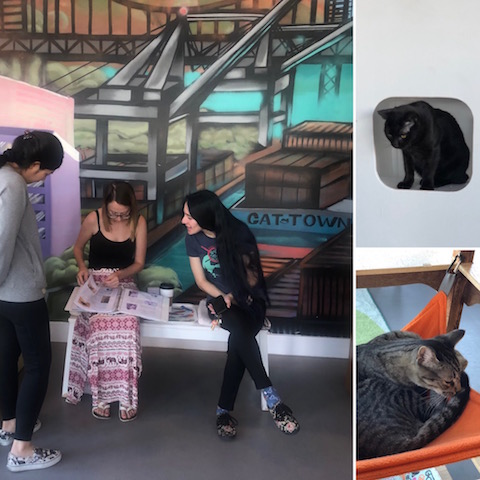 AnimalBiome team visits Cat Town in Oakland