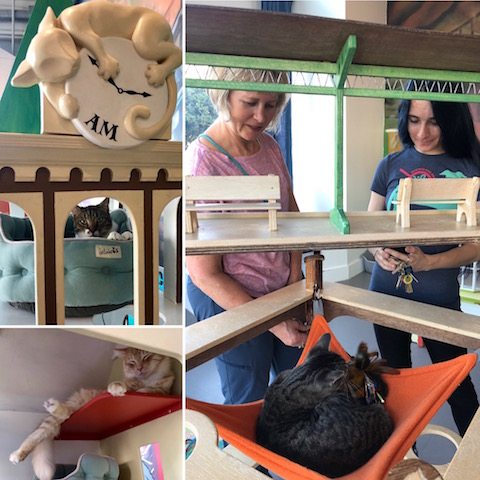 Cat Town in Oakland rescues shelter cats