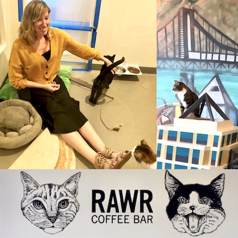 AnimalBiome visits Cat Town in Oakland