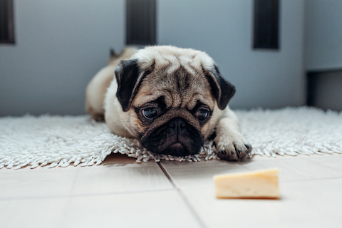 Dog with food sensitivities