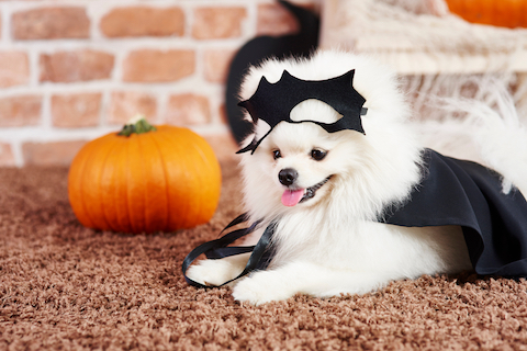 How to Keep Your Dog & Cat Safe This Halloween