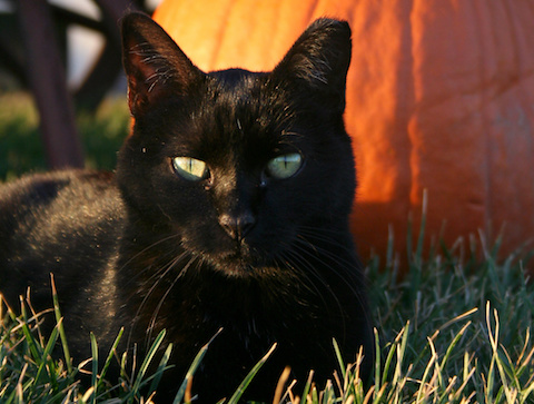 Beautiful black cat sitting on grass