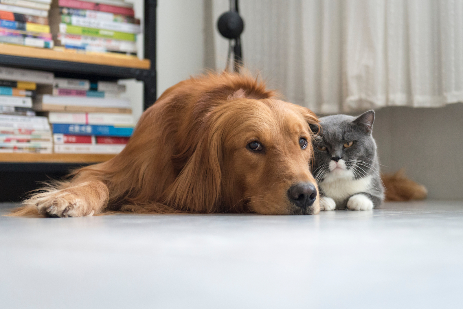 Do You Know How to Spot Diabetes in Dogs and Cats?