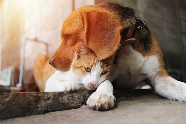 20 Bay Area Animal Shelters Rescues You Need To Know About Animalbiome