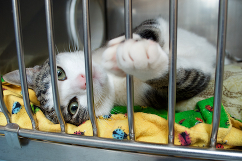 Cat in a Bay Area city animal shelter
