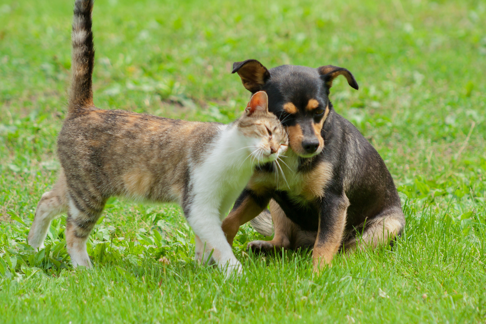 Healing Your Dog or Cat With a Fecal Transplant: What You Need to Know