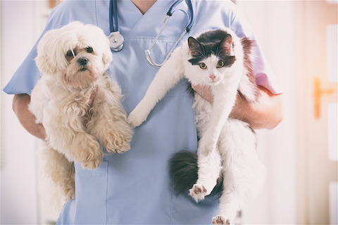 Should I get my pet tested for COVID-19?