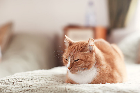 Your cat or dog does not need to be tested for COVID-19.