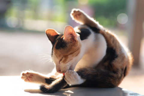 Cats who overgroom themselves may indicate anxiety or allergies.