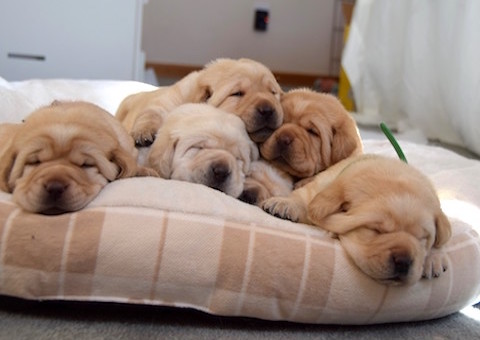 Adorable puppies sleeping
