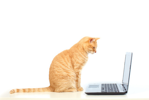 How Veterinarians Can Incorporate Telehealth Services in 2020
