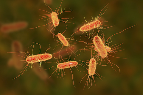 Escherichia coli bacterium, E.coli, gram-negative rod-shaped bacteria, part of intestinal normal flora and causative agent of diarrhea and inflammations. 3D illustration - AnimalBiome