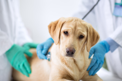 Available Treatments for dogs and cats with high E. coli