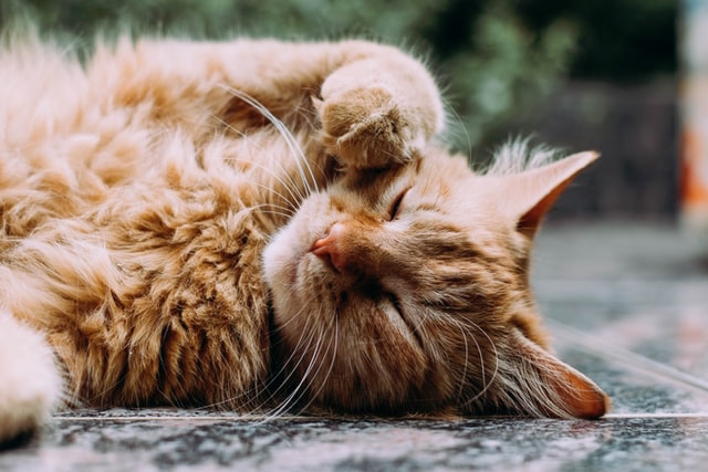 9 Ways to Improve Your Cat's Gut Health
