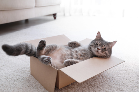 What's the difference between Cat IBS and Cat IBD?