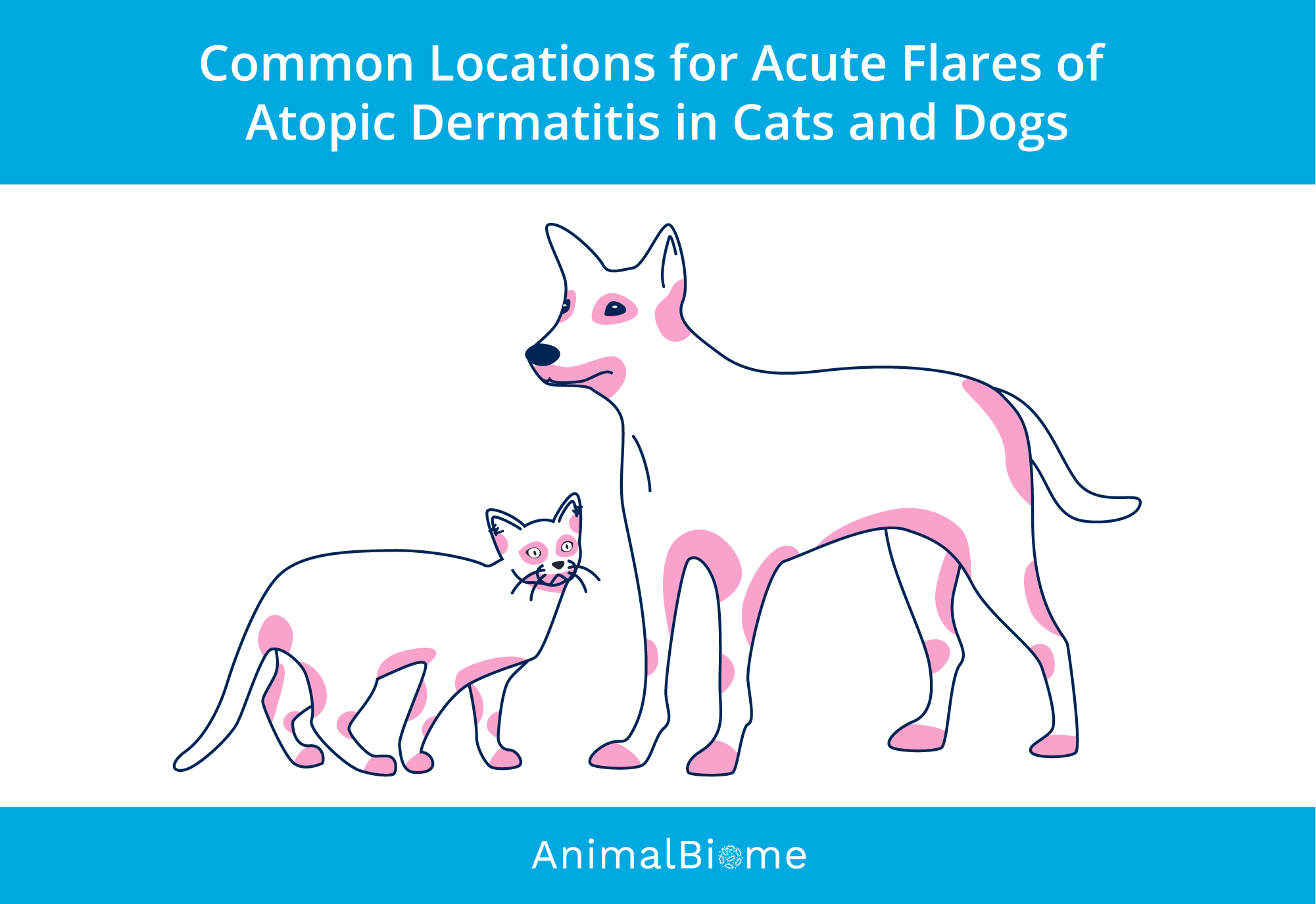 Picture of acute flares of dog atopic dermatitis and cat atopic dermatitis