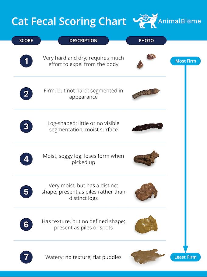 Cat Fecal Scoring Chart - Cat Poop Chart