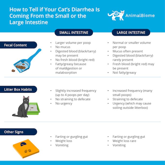 How to Tell if Your Cat's Diarrhea Is Coming From the Small Intestine or the Large Intestine