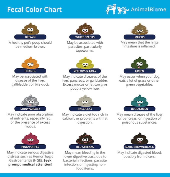 Cat Fecal Color Chart: Cat Poop Color