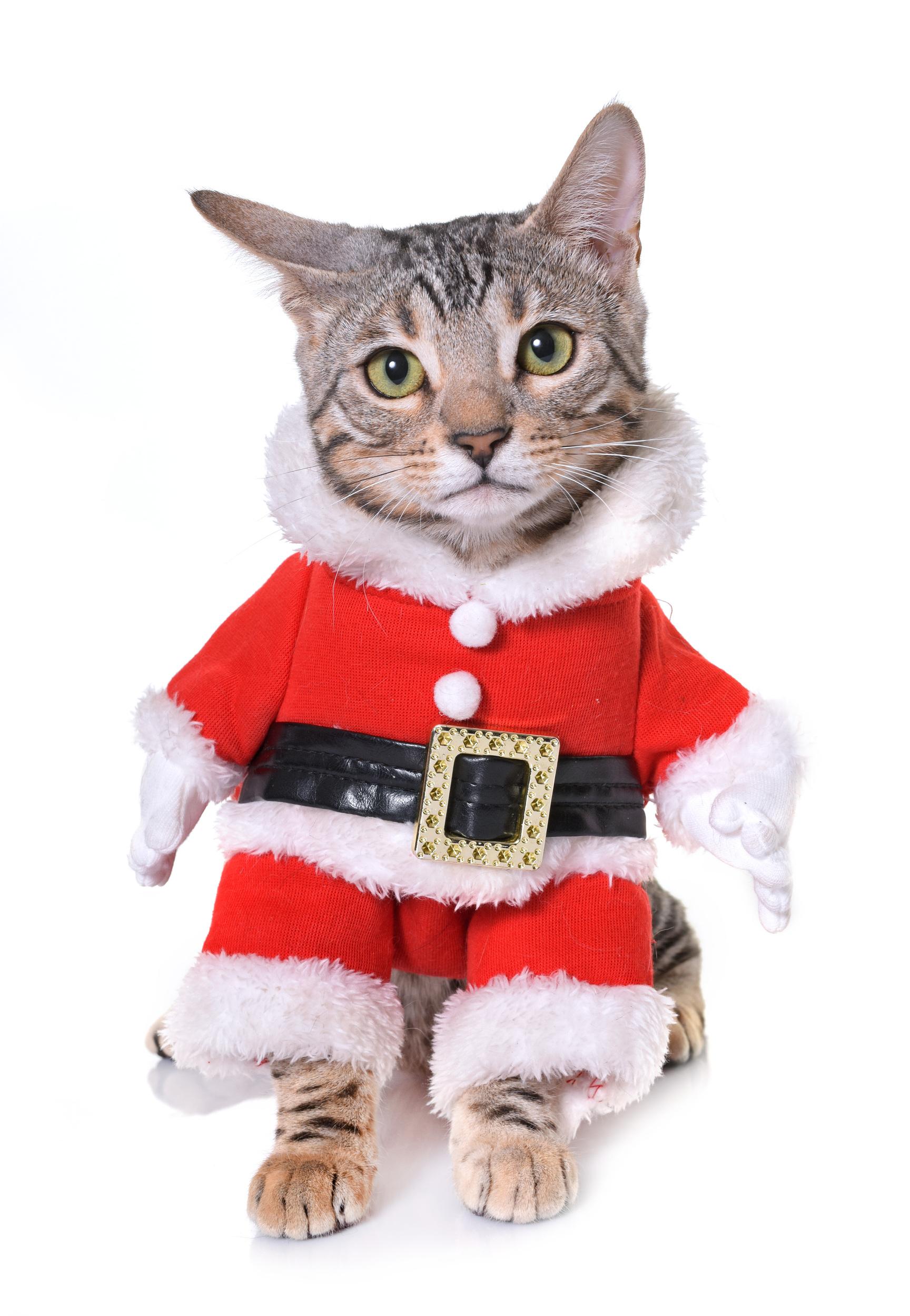 Cat in a Santa Suit