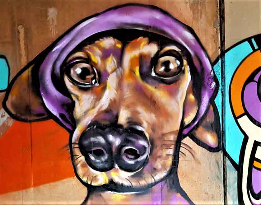 Graffiti street art painting of a dachshund wearing a purple bandana