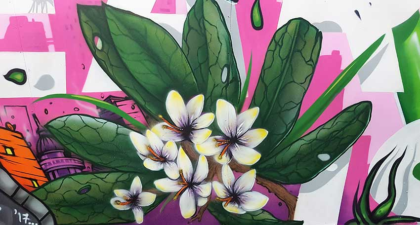 Painting of flowers on a pink background, wall art mural for home makers expo live graffiti painting demo