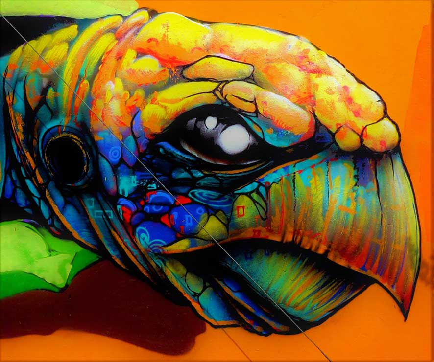 Sea turtle grafiti street art wall mural by zesta