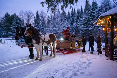 Percheron Draft Horses from Lucky Clover Farm at the Lake Clear Lodge Lakefront pulling an 1850s Henderson Stagecoach.