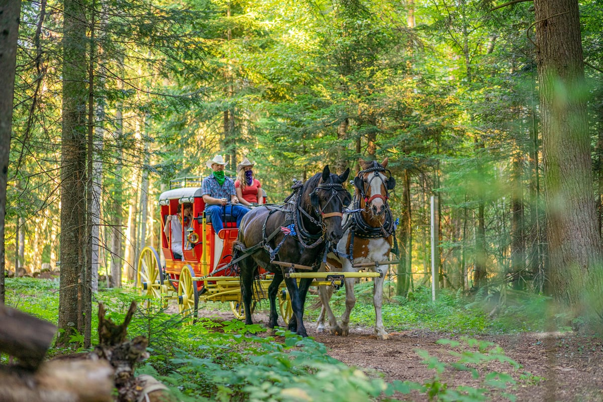 Percheron Draft Horse team Jasper and Fly pull an 1850s Henderson Stagecoach through the wooded trails at the Lake Clear Lodge & Retreat.