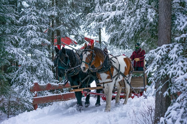 Percheron Draft Horses Jasper and Fly pull a beautiful hand-crafted sleigh over a wintery bridge through Lantern-lit trails at the Lake Clear Lodge & Retreat.
