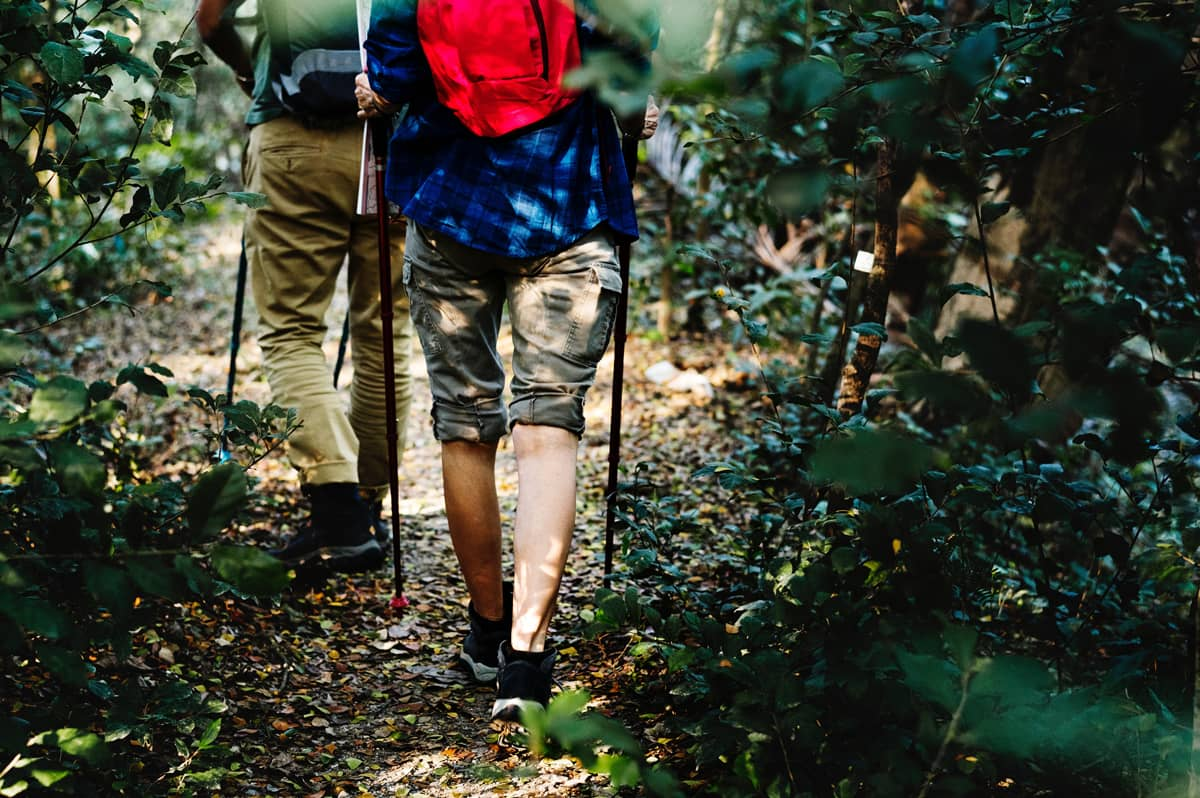 Trail hikers on a nature path
