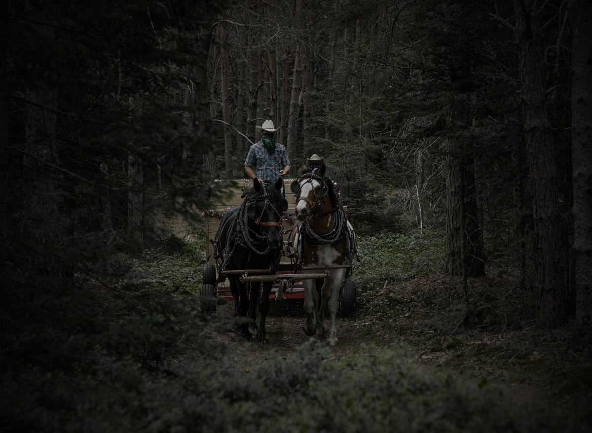Percheron Draft Horses with a Wood Wagon in the Woods at the Lake Clear Lodge