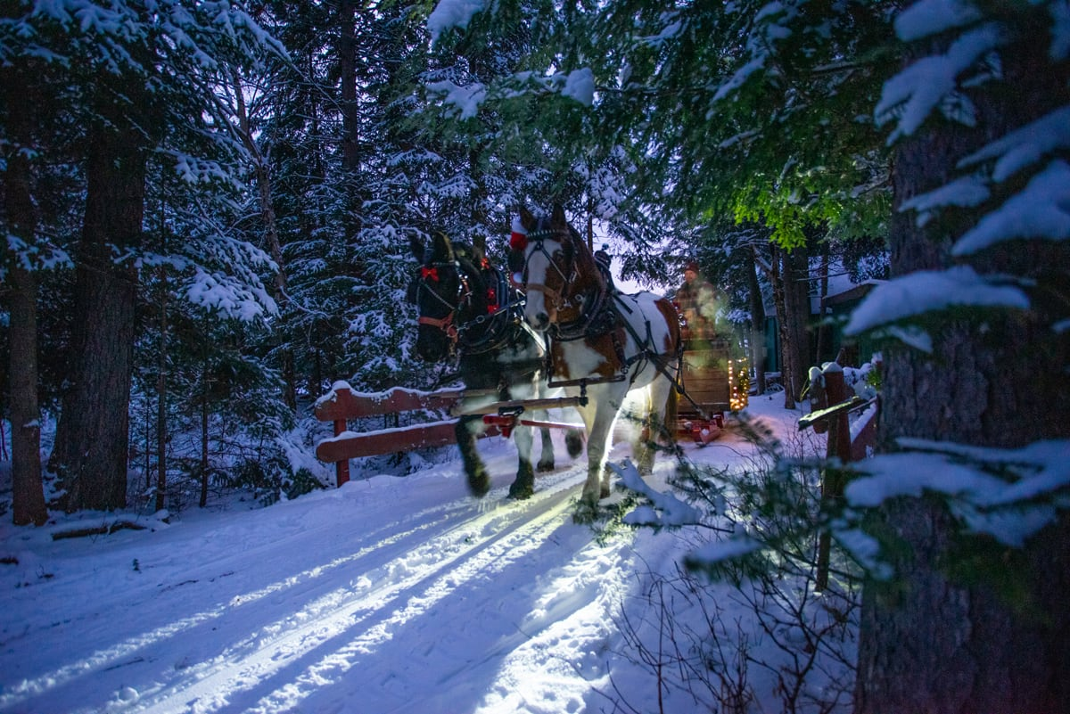 Draft Horses from Lucky Clover Sleigh Rides pull a lighted sleigh over a wintery bridge through Lantern-lit woods at the Lake Clear Lodge & Retreat.