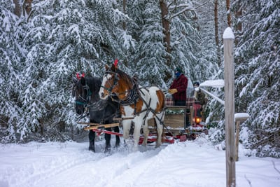 Draft horses pull a hand-built sleigh on the Lake Clear Lodge's lantern-lit trails on a beautiful winter day.