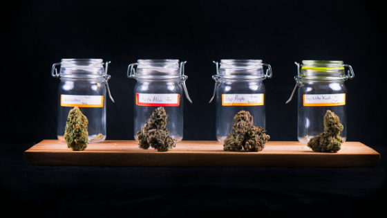 four cannabis strains over black background at cannabis dispensary