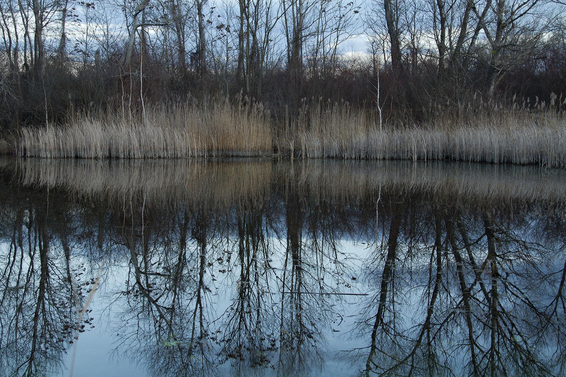 Spiegelung im Mühlwasser